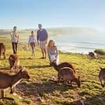 Lý do nào thích hợp để xin visa du lịch Úc