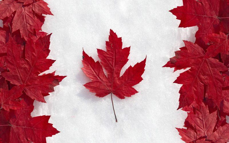 mẫu đơn xin visa du lịch Canada